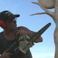 chainsaw carving masters